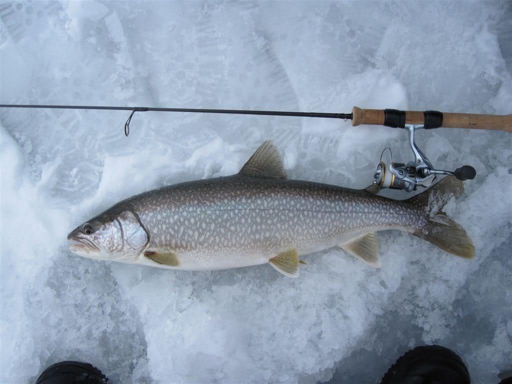 Lt001 lake simcoe fishing for Lake simcoe fishing